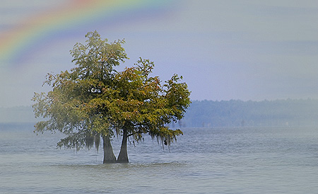 Noah and the rainbow covenant