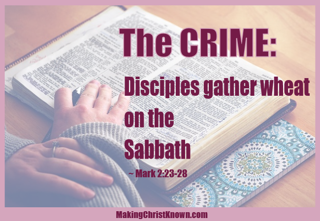 Disciples gather wheat on the Sabbath